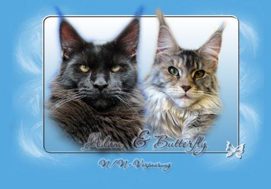 kitten-eltern-fb